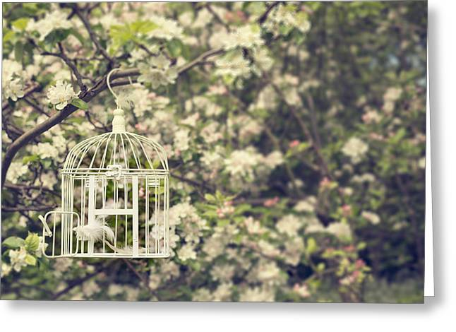 Open Door Greeting Cards - Birdcage In Blossom Greeting Card by Amanda And Christopher Elwell