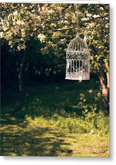 Bird Cages Greeting Cards - Birdcage In The Orchard Greeting Card by Amanda And Christopher Elwell