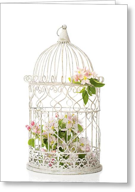 Flower Display Greeting Cards - Birdcage of spring blossom Greeting Card by Amanda And Christopher Elwell