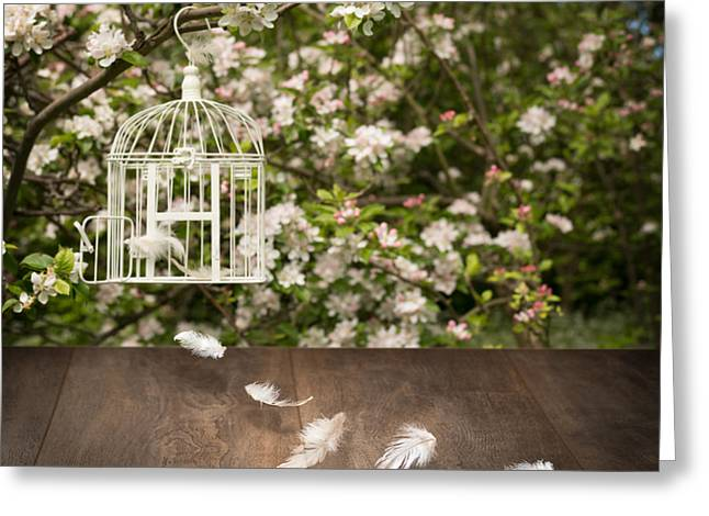 Birdcage With Feathers Greeting Card by Amanda Elwell