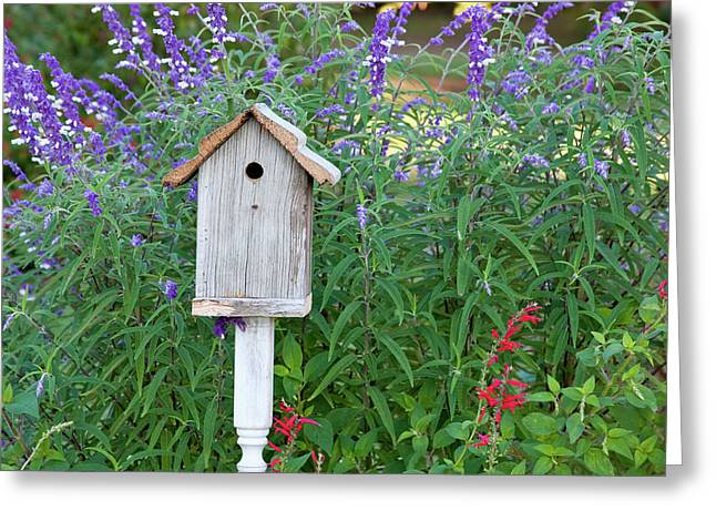 Birdhouse In Garden With Mexican Bush Greeting Card by Richard and Susan Day