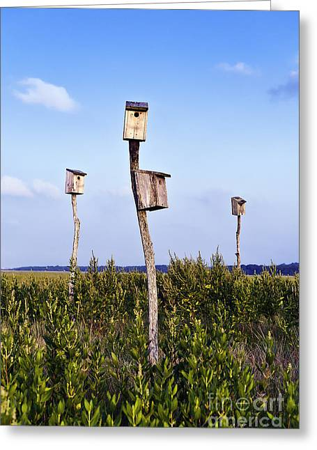 Birdhouses In Salt Marsh. Greeting Card by John Greim