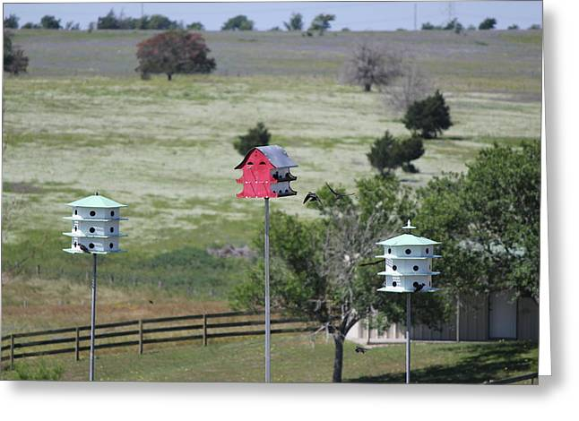 La Grange Greeting Cards - Birdhouses Greeting Card by Rod Andress