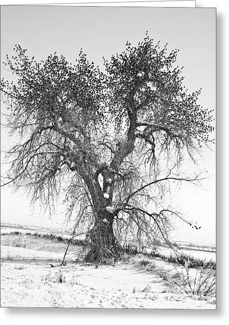 Winter Photos Greeting Cards - Birdland Black and White Greeting Card by James BO  Insogna