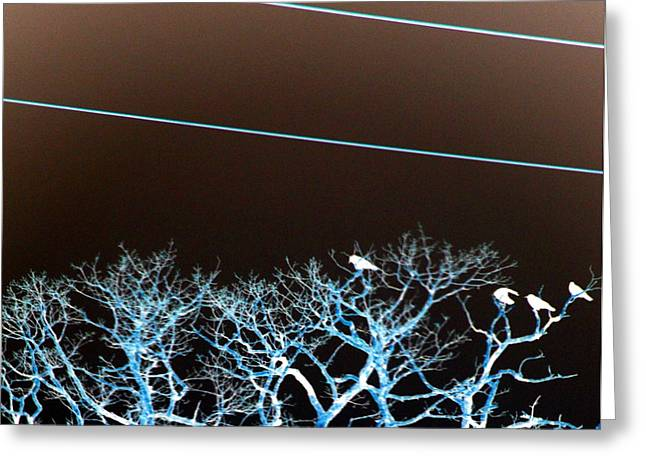 Inverted Color Greeting Cards - Birds Greeting Card by A K Dayton