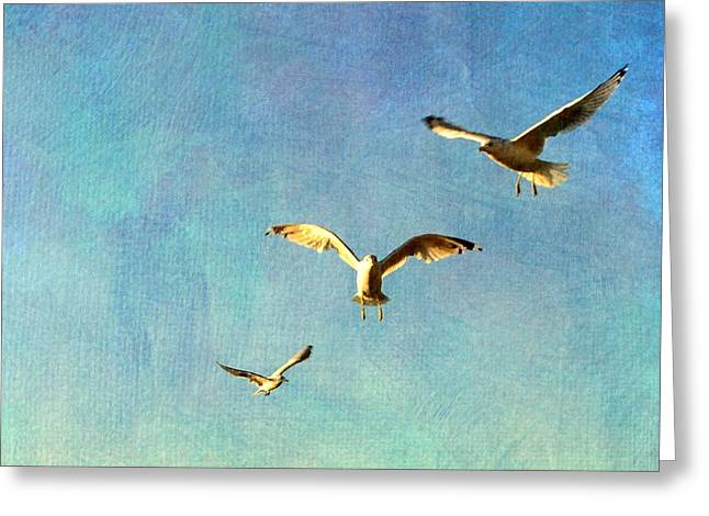 Flying Seagull Greeting Cards - Birds Above Greeting Card by Michelle Calkins