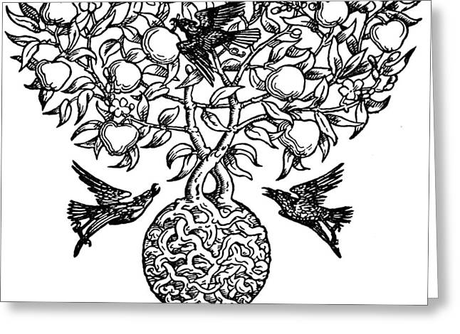 Pear Art Drawings Greeting Cards - Birds and Fruit Tree Engraving Greeting Card by