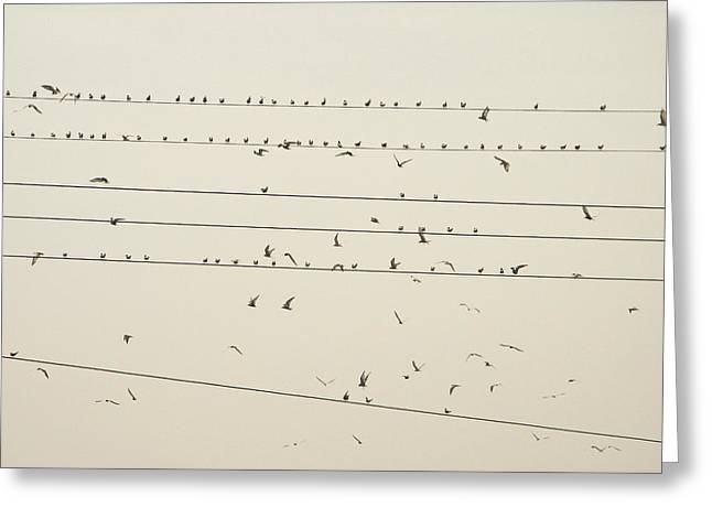 Asien Greeting Cards - Birds and Wires One Greeting Card by Pete Marchetto