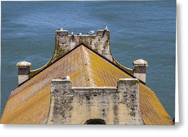 San Fransico Greeting Cards - Birds at Alcatraz Greeting Card by John McGraw