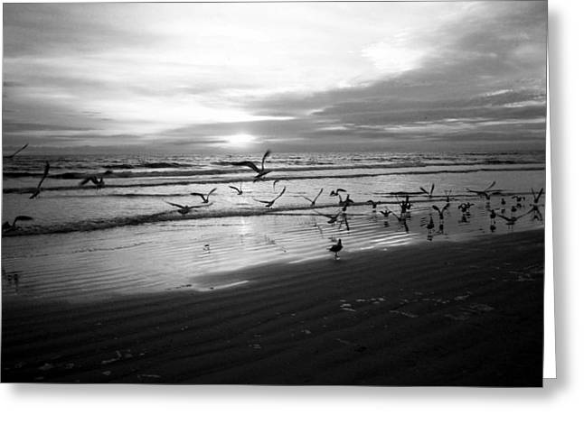 Carolyn Stagger Cokley Greeting Cards - Birds At Sunrise Bw Greeting Card by Carolyn Stagger Cokley