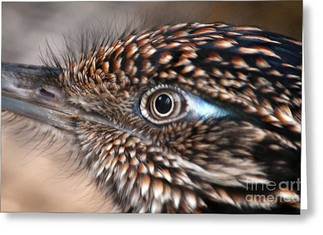 Aviary Greeting Cards - Birds Eye View Greeting Card by Dan Holm