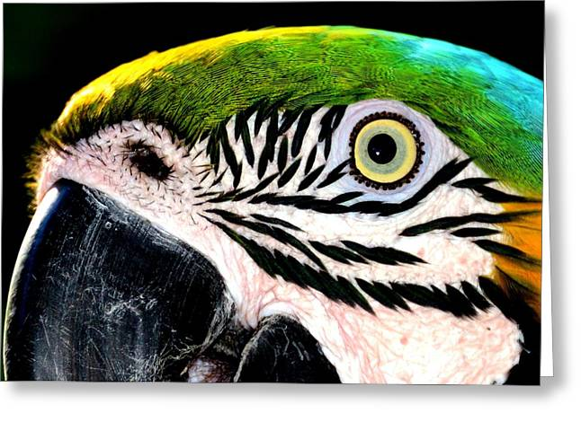 Mccaw Greeting Cards - Birds Eye View Greeting Card by Lisa Renee Ludlum