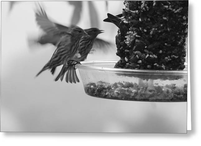 Hungry Fly Greeting Cards - Birds Feeding Greeting Card by Ron Roberts