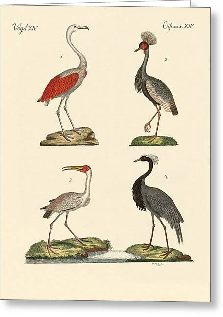 Demoiselles Greeting Cards - Birds from hot countries Greeting Card by Splendid Art Prints