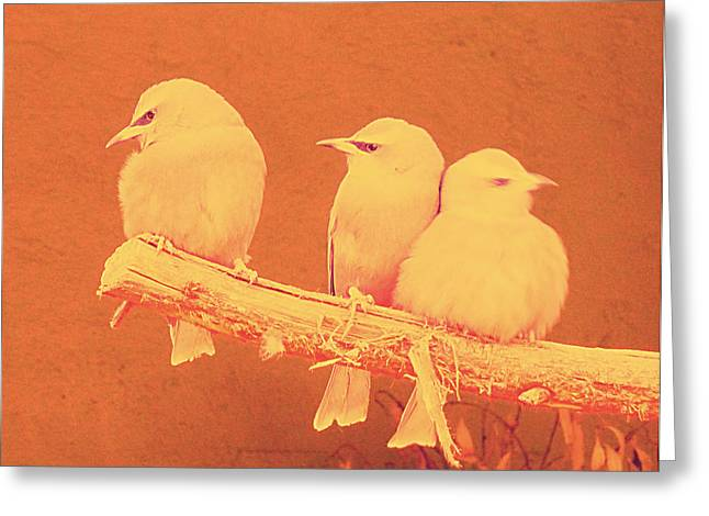 Bright Colors Pyrography Greeting Cards - Birds Greeting Card by Girish J