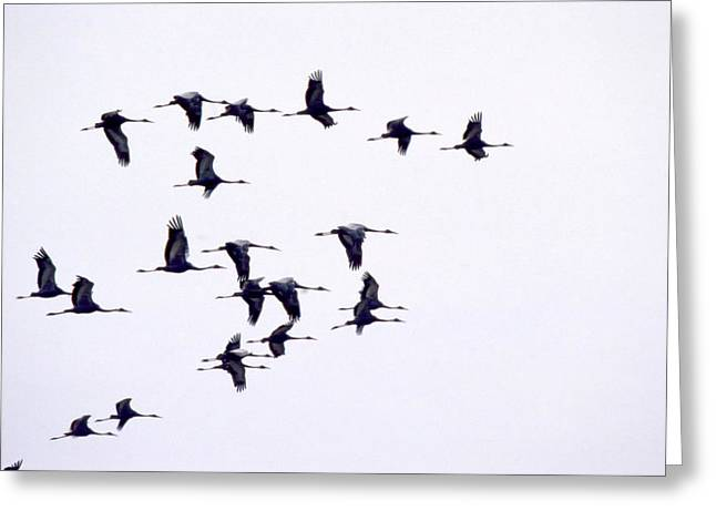 Landscape Photograph Greeting Cards - Birds In Flight Greeting Card by Anonymous