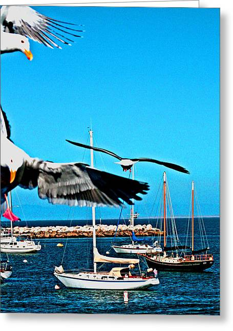 Half Moon Bay Digital Greeting Cards - Birds In Paradise Greeting Card by Joseph Coulombe