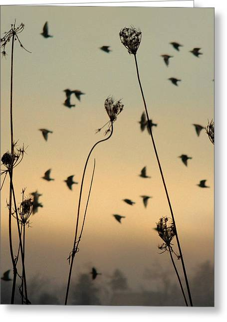 Graduated Background Greeting Cards - Birds in the sky Greeting Card by Gothicolors Donna Snyder