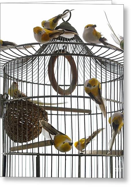 Groups Of Animals Greeting Cards - Birds inside and outside a cage Greeting Card by Bernard Jaubert