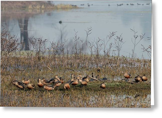Birds Keoladeo Ghana National Park Greeting Card by Tom Norring