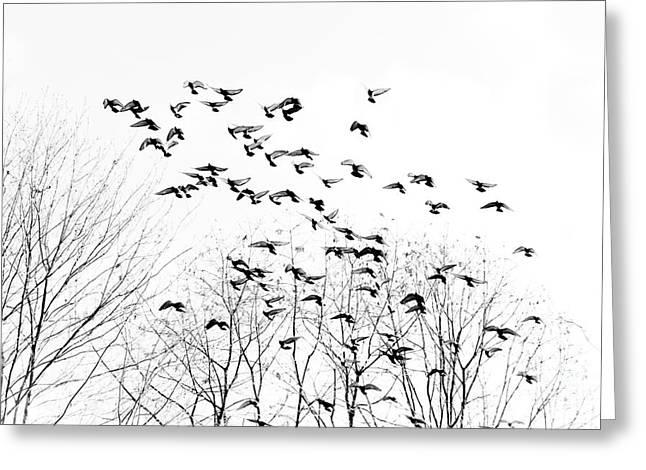 Kevin Barske Greeting Cards - Birds Greeting Card by Kevin Barske