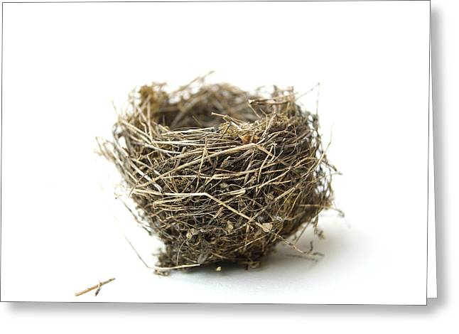 Bird's Nest Greeting Card by Bernard Jaubert