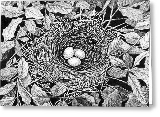 Janet King Drawings Greeting Cards - Birds nest Greeting Card by Janet King