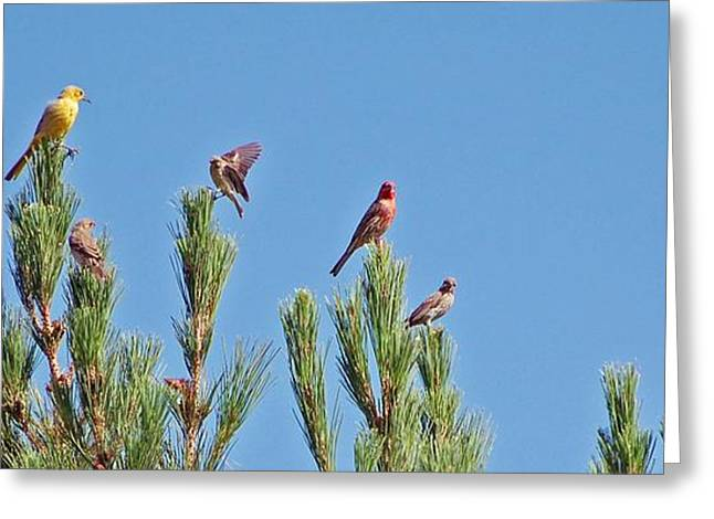 Bird On Tree Mixed Media Greeting Cards - Birds not of a feather Greeting Card by Robin Coats