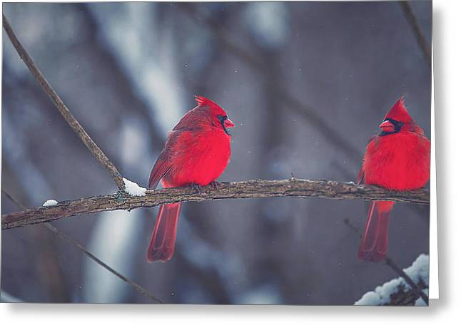 Winter Greeting Cards - Birds Of A Feather Greeting Card by Carrie Ann Grippo-Pike