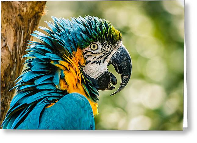D700 Greeting Cards - Birds of a Feather Greeting Card by Chris Modlin