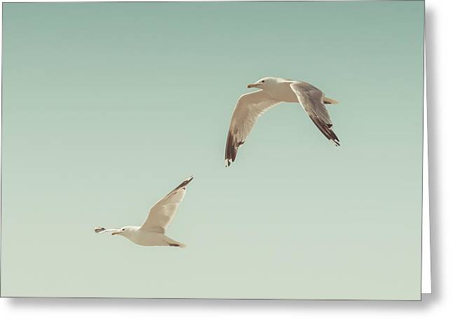 Seagull Greeting Cards - Birds of A Feather Greeting Card by Lucid Mood
