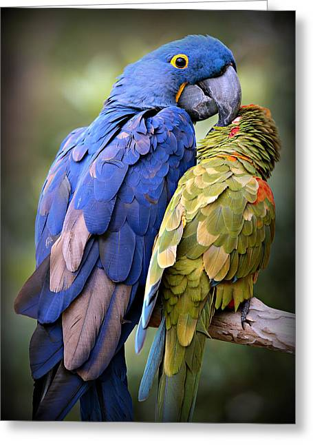 Birds Of A Feather Greeting Card by Stephen Stookey