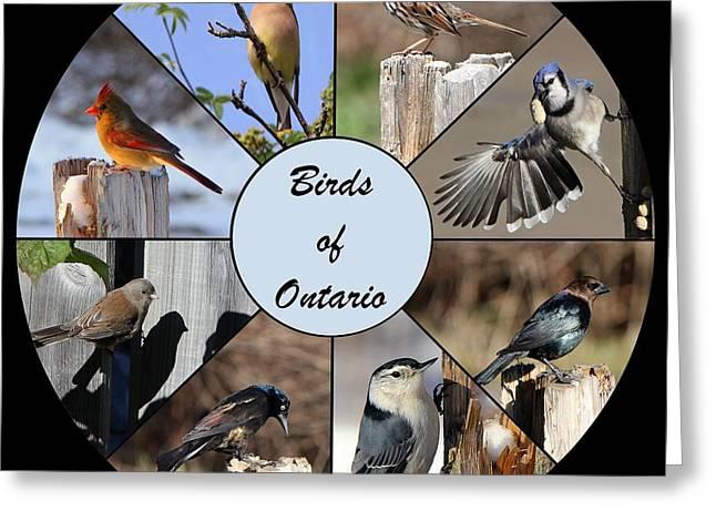 Birds Of Ontario Greeting Card by Davandra Cribbie
