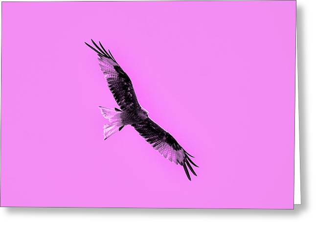 Lithography Greeting Cards - Birds of prey Greeting Card by Toppart Sweden