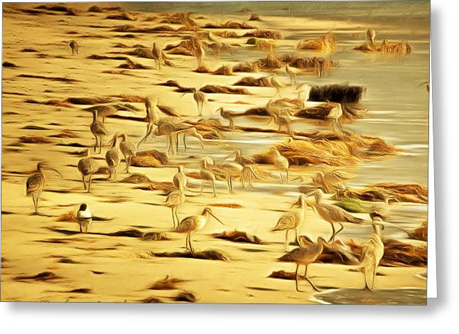 Sand Piper Greeting Cards - Birds of Santa Barbara Greeting Card by Barbara Snyder