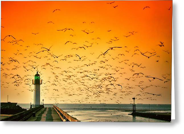 Ocean. Reflection Greeting Cards - Birds of Sunset Greeting Card by Mountain Dreams