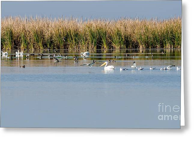 The Nature Center Greeting Cards - Birds Enjoying the Freshwater Marsh Greeting Card by Debra Martz