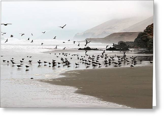 Foggy Ocean Greeting Cards - Birds of the Pacific  Greeting Card by Nathalie Deslauriers