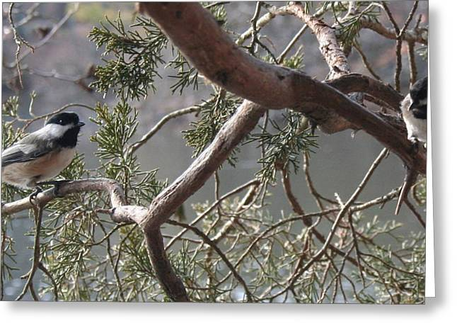 Stephen Melcher Greeting Cards - Birds on a Branch ver A Greeting Card by Stephen Melcher