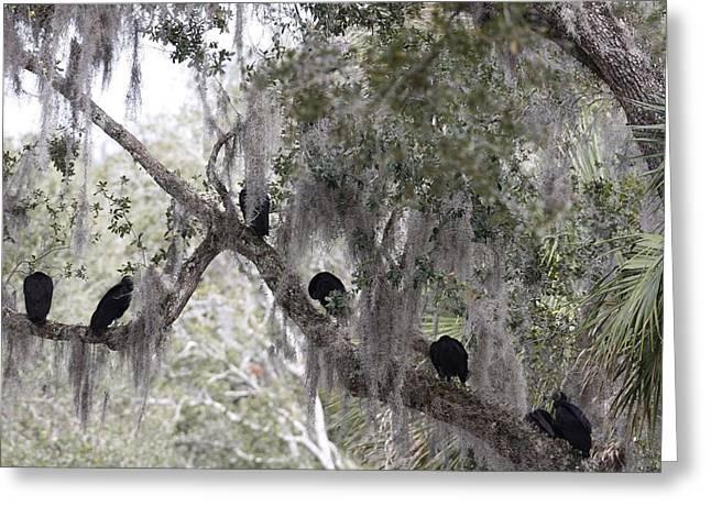 Birds On A Limb Greeting Card by Kimberly Oegerle