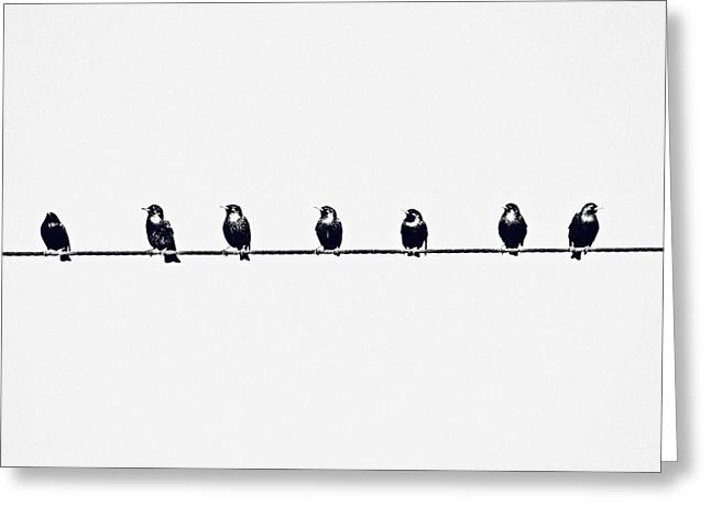 Birds On A Wire Greeting Card by Jessie Gould