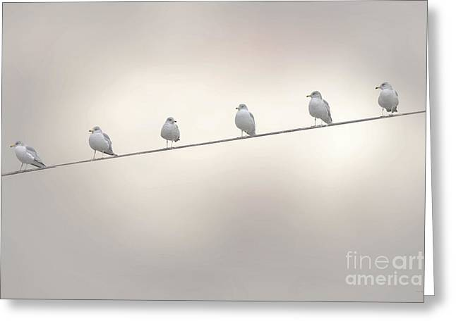 Bird On A Wire Greeting Cards - Birds On A Wire Greeting Card by Tom York Images