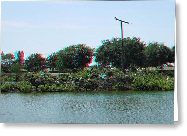 Photography Galleries On Line Greeting Cards - Birds on an Island Greeting Card by Ron Davidson