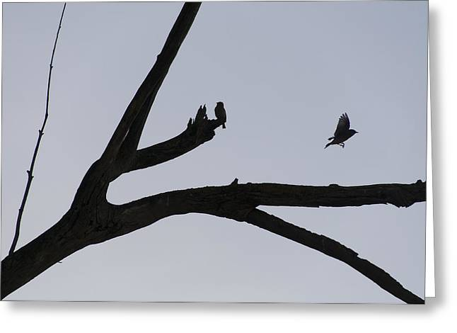 Birds On An Old Tree Limb Greeting Card by Scott Lenhart