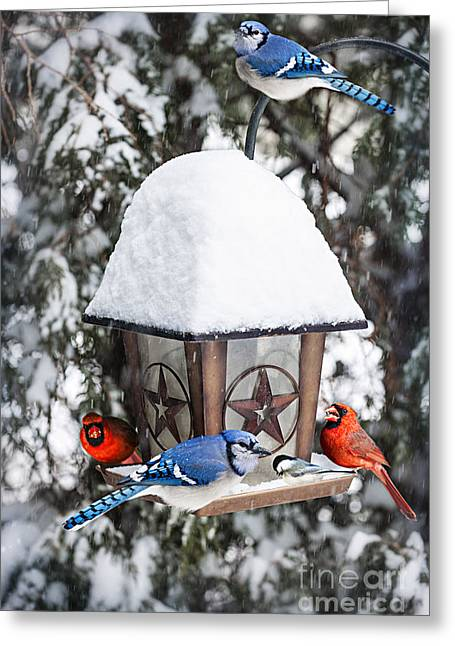 Bird-feeder Greeting Cards - Birds on bird feeder in winter Greeting Card by Elena Elisseeva