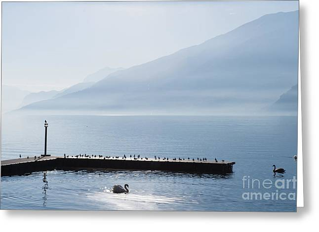 Charming Vistas Greeting Cards - birds on pontoon against misty hills Lake Como Italy Greeting Card by Peter Noyce