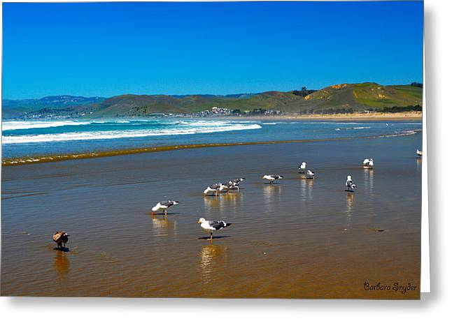 On The Beach Digital Greeting Cards - Birds On The Beach Morro Bay California Greeting Card by Barbara Snyder
