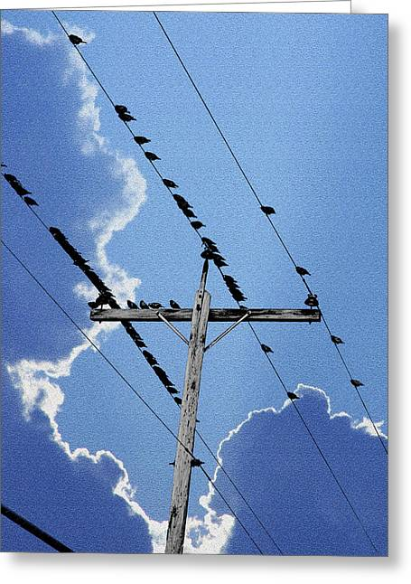 Birds On The Line Greeting Card by Mike Flynn