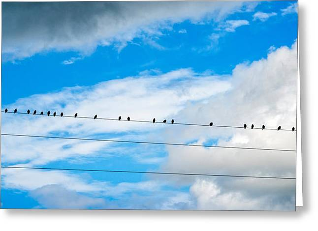 Flock Of Bird Greeting Cards - Birds Perching On A Wire Greeting Card by Panoramic Images