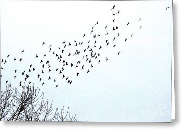 Esem8chart.com Greeting Cards - Birds Greeting Card by Sarah Holenstein